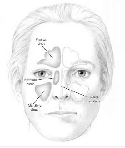 How Your Sinuses Work - Chronic Sinusitis - Flanders Health Blog