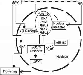 Biochemical Signaling Flowering
