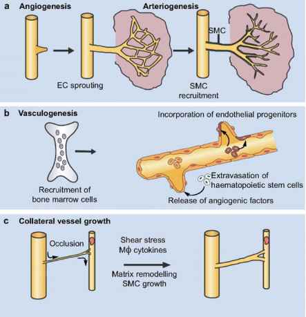 Thrombotic Microangiopathy